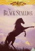 Der Schwarze Hengst - [The Black Stallion] - [UK] DVD