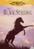 Der Schwarze Hengst - [The Black Stallion] - [UK] DVD